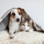 ペット可マンションに住む!賃貸不動産に行く前に準備すべきこと
